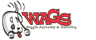 Wags Doggie Daycamp & Boarding |  Danbury CT